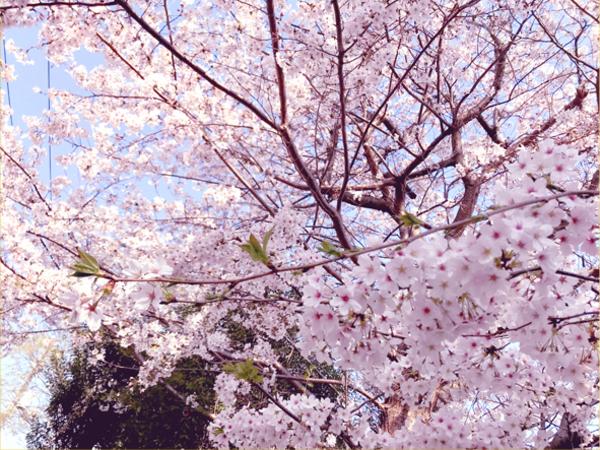 桜の時期も過ぎて…