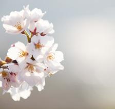 春めいてきました🌸