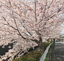 桜の時期もおわりですね